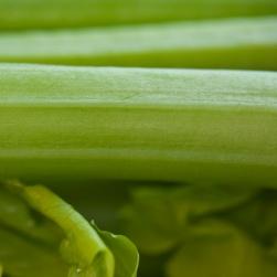 08_Green-celery