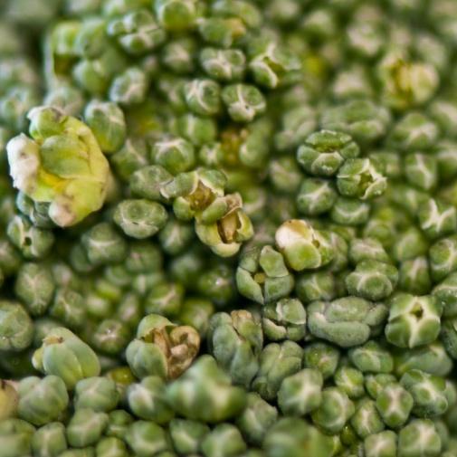 12+Green-broccoli