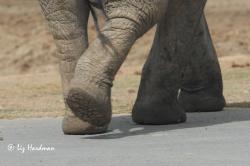 Elephant-foot-tread