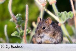April: Field mice, sharing parsley.