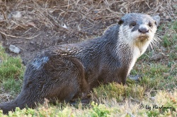 March: Otters come calling.