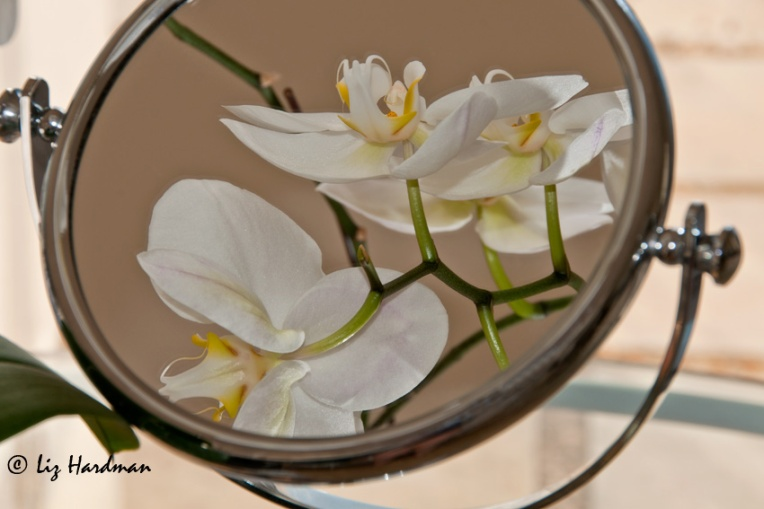 Orchid-reflected