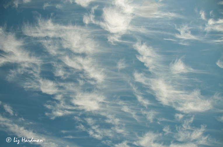 08_Mares-tails