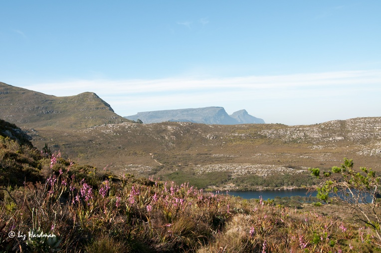 Looking towards the back of Table Mountain and Devil's Peak, the water of the Silvermine dam lies tucked in a secluded fold of mountain.