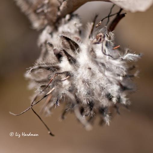 Seed-head