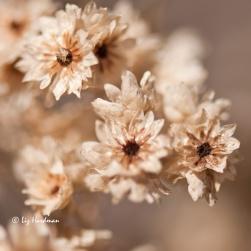 Summer's-seeds