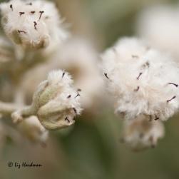 Summer's-seeds_02