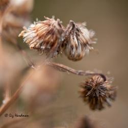 Summer's-seeds_03