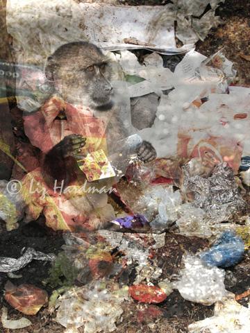 Waste_01
