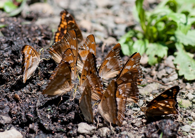 Butterfly aggregation