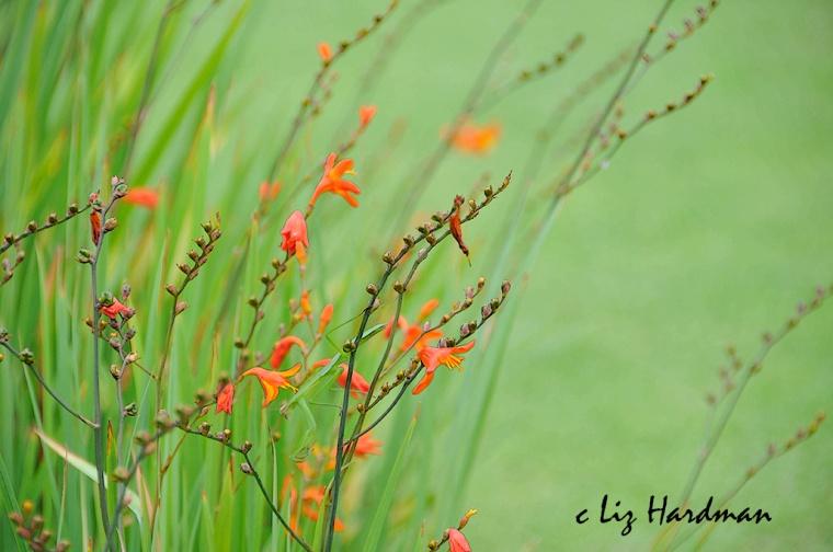 Flower-haiku