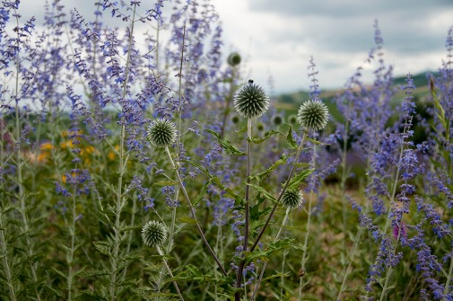 Wildflowers_random_01