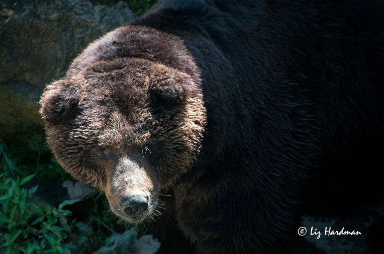 Visitors can get close up views of the bears from the viewing platforms or through the bus windows.