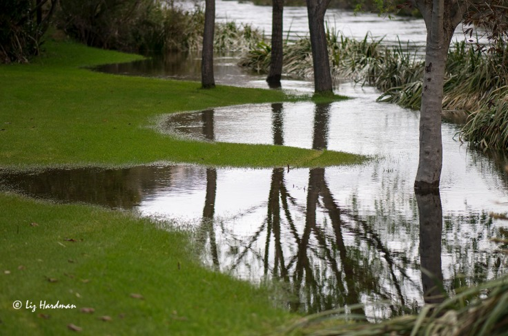 Good rainfall this season has brought a blossoming spring and the earth is saturated in a verdant green.
