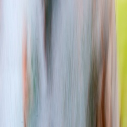Random patterns_ bluegum
