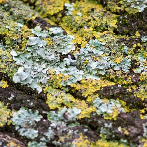 Random patterns_lichen