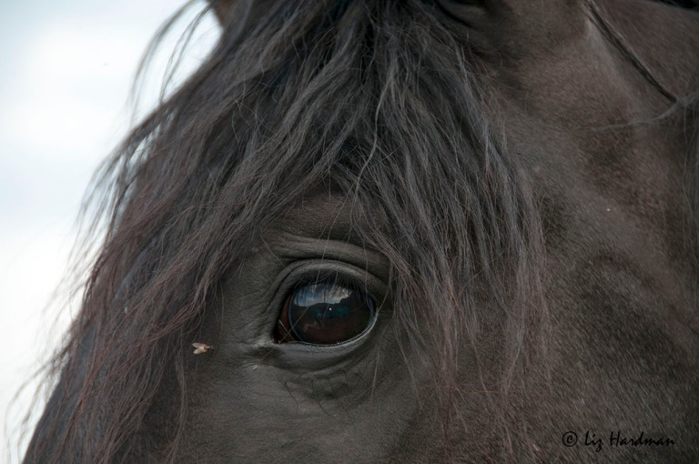 Captured here in the depths of this horse's eye I find something immeasurable, indefinable.  It's a feeling, a timelessness, stretching beyond eternity.