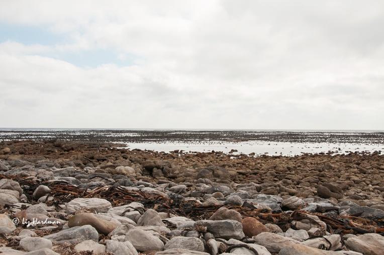 The-rocky-shoreline