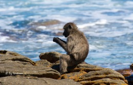 A young female is engrossed in cracking mussels.