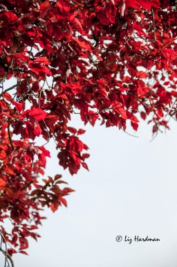 Autumnal fire