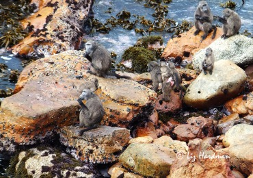 The opportunity to forage on the rocks.