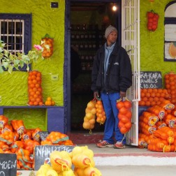 Citrusdal oranges