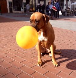 My orange ballooon