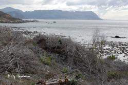 False Bay looking towards Muizenberg