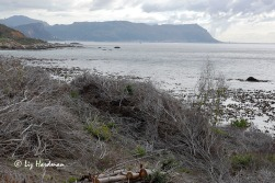 False Bay looking towards Muizenberg