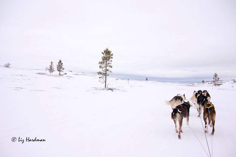Across the tundra