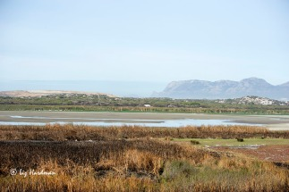 The ponds are low as the weir was recently opened to drain the vlei to control the beds of Typha.