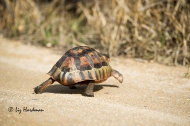 Full speed ahead.