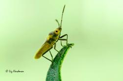 Bugs01_vivid