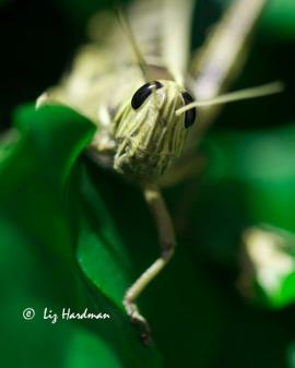 Bugs03_vivid
