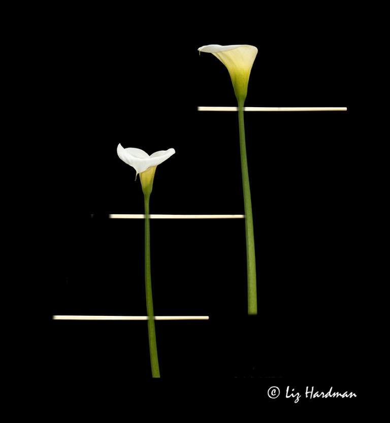 Arum Lillies_03