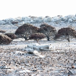 The desolate landscape.