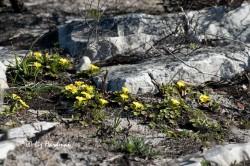 Plant life regenerates.