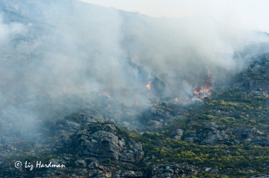 Fire is a part of the natural cycle in maintaining the health of the fynbos plant species.