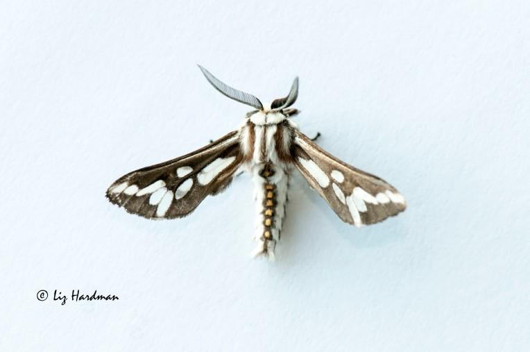 Moth_02