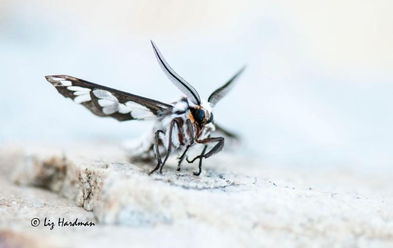 Moth_01