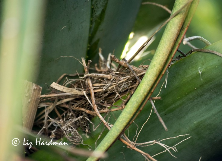 New nest 9 October