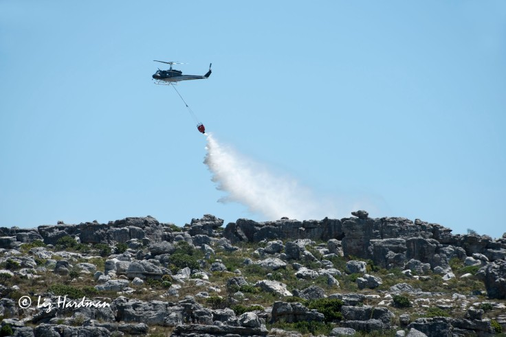 One of five helicopters dropping water.