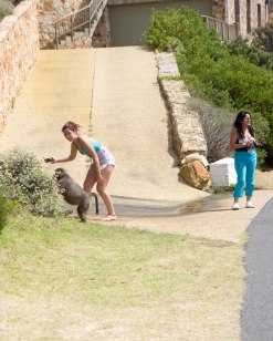 Tourist engaging a baboon in a photo shot.