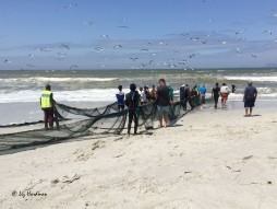 The nets are set using boats and then the men haul from shore.