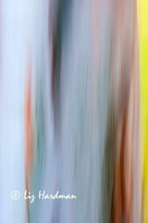 Abstract_intentional camera movement_02