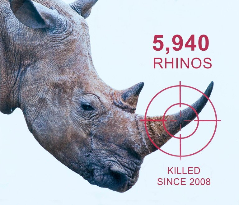 Rhino-poaching-numbers