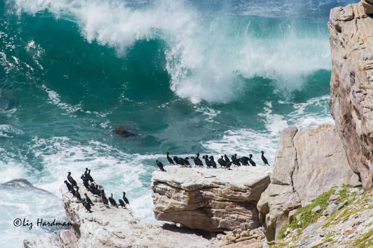Cliffs_over_Cape_Point