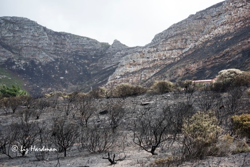 The scenes of desolation_2015