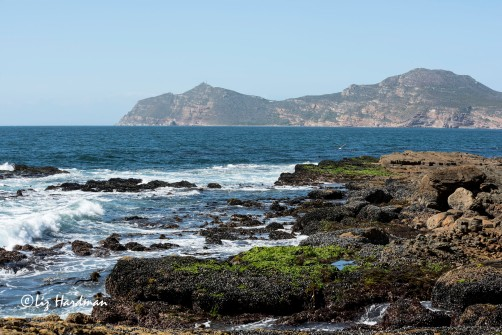 Low tide exposes the intertidal zone and a seafood feast for the local baboons.