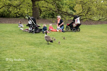 Picnic, parents and young